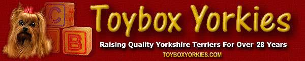 Toybox Yorkies